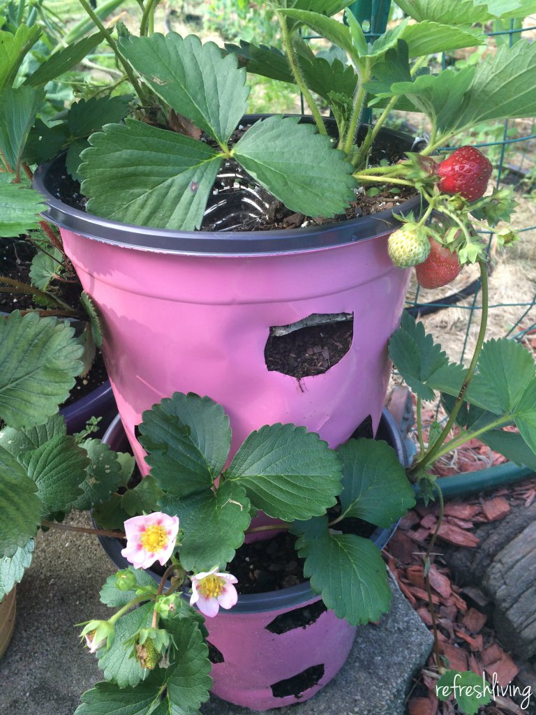 DIY-strawberry-planter.jpg