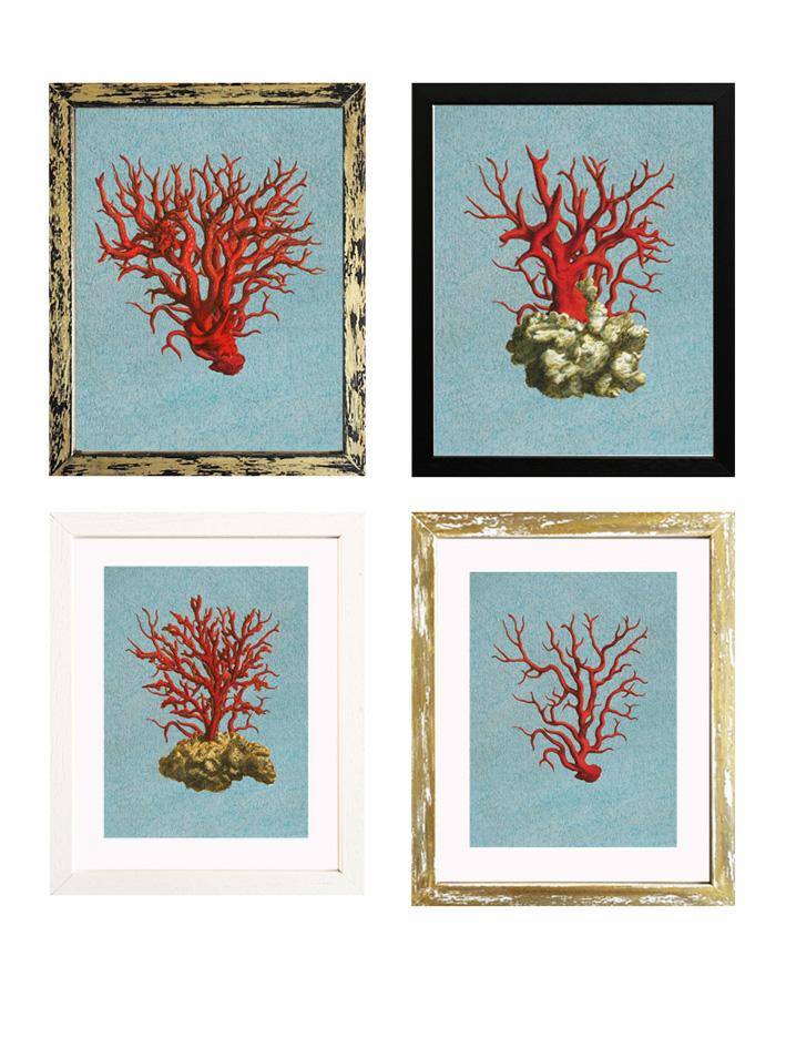 Cuadros y láminas de corales rojos —Tartan and Zebra
