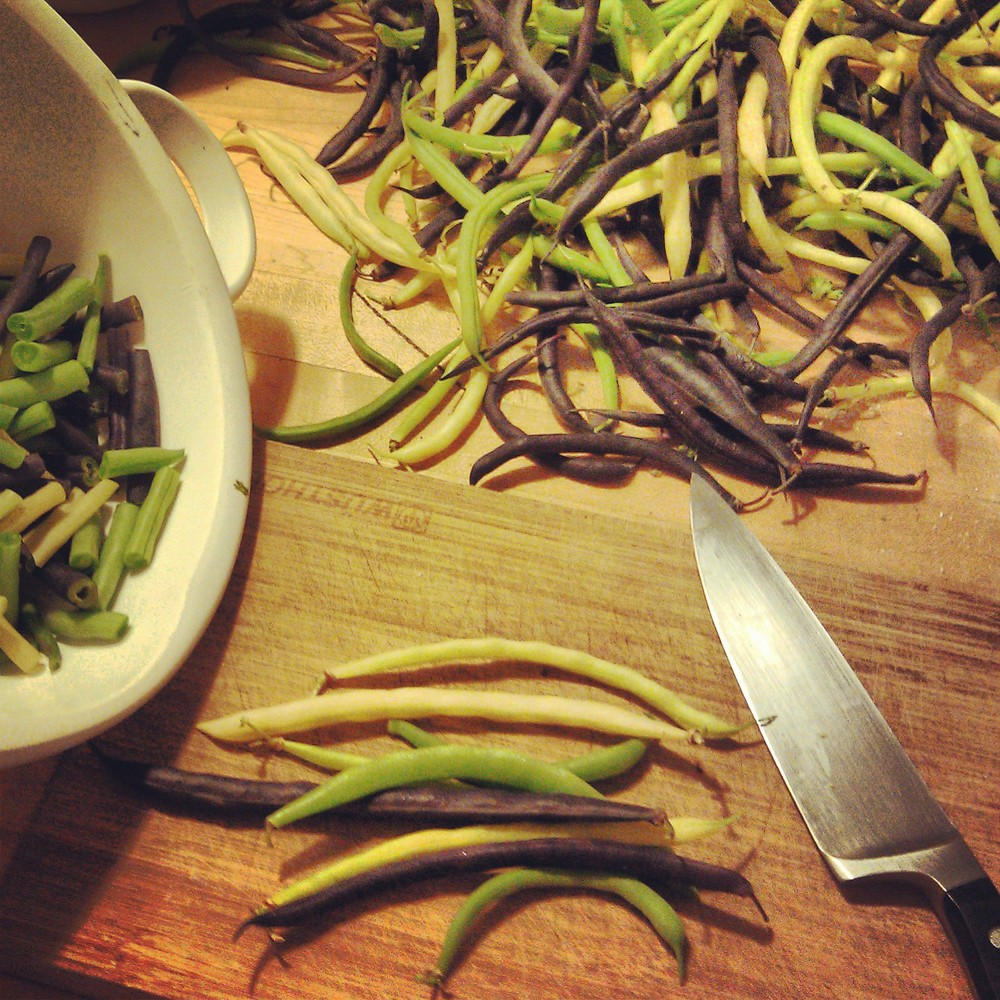 Preparation to ferment dilly beans.       Photo Credit Caitlin Elberson