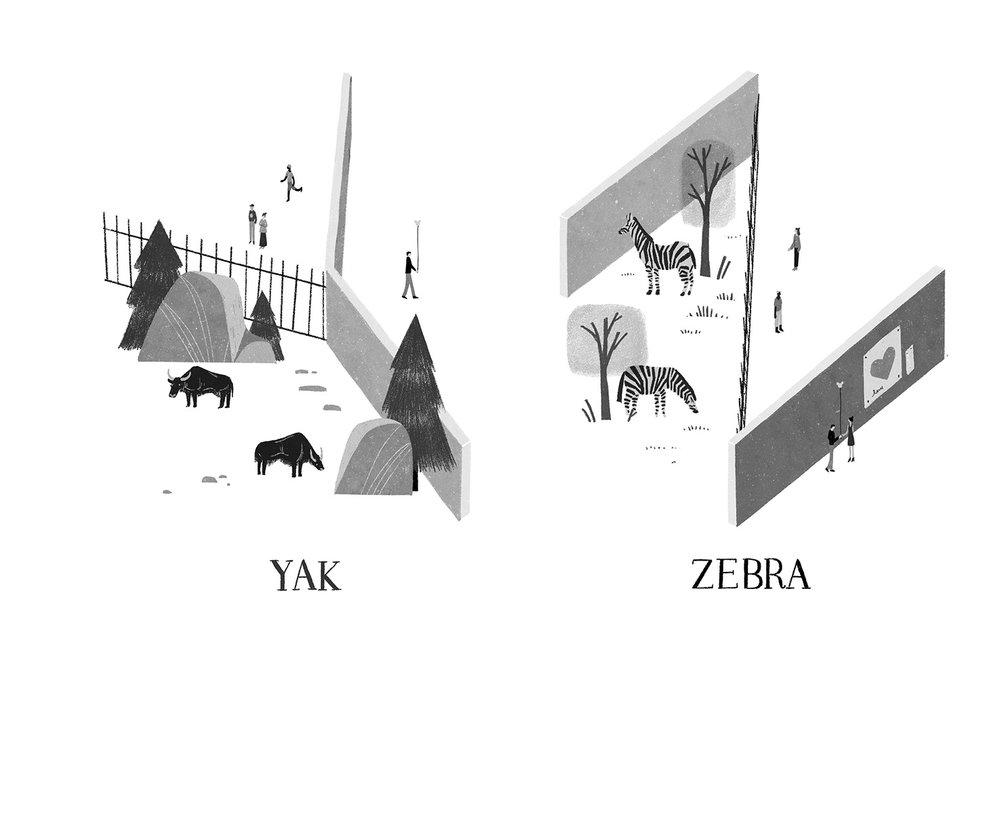 Y-Z.jpg