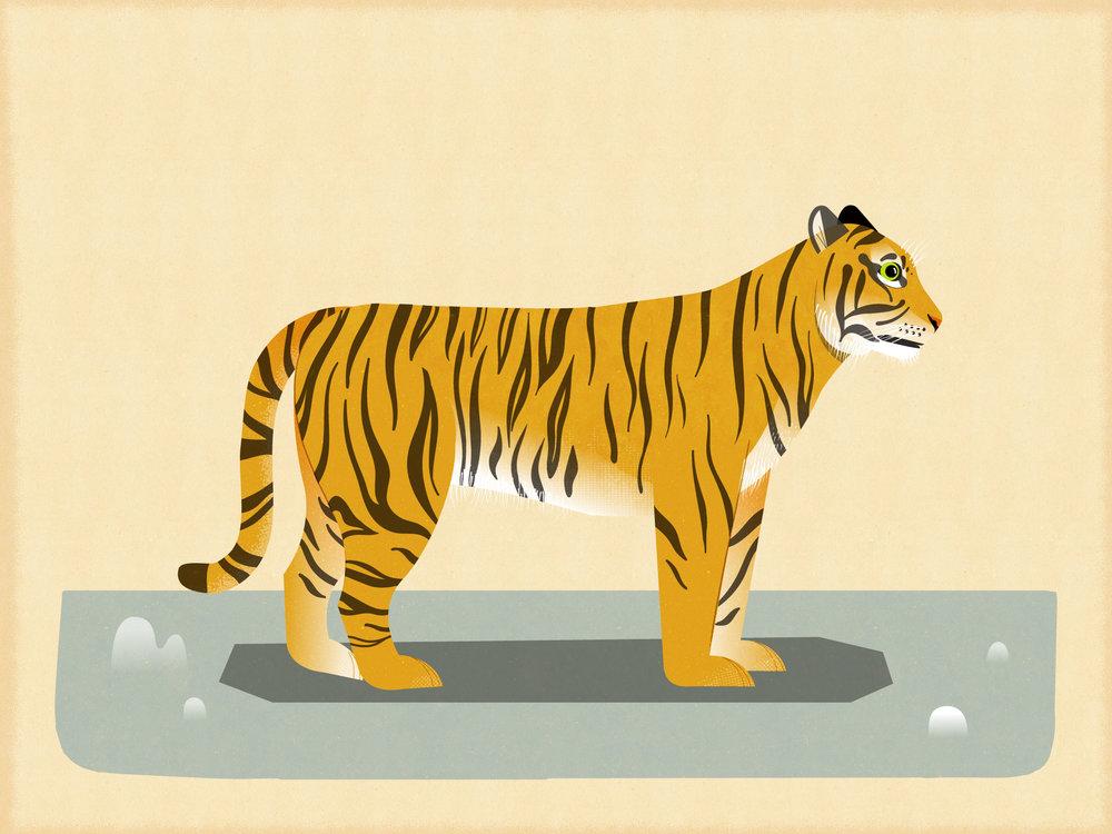 TigerExterior.jpg