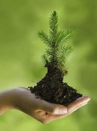 Portland_Family_Fun_Earth_Week_Plant_A_Tree