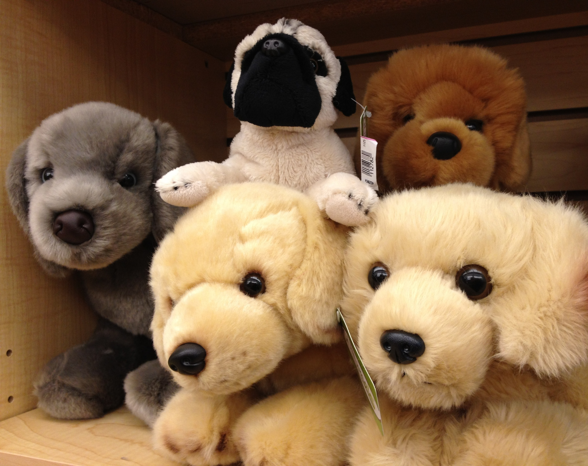 Toys_in_Portland_Stuffed_Animals_Plush_Dogs
