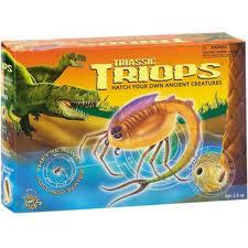 Toys_in_Portland_Triops