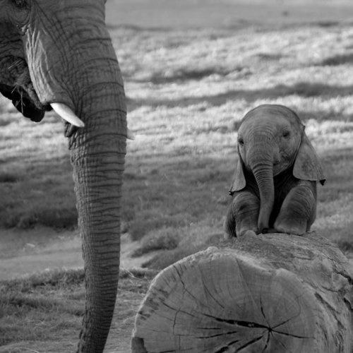 Portland_Toys_cute_baby_elephant
