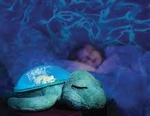 Toys_in_Portland_tranquil_turtle