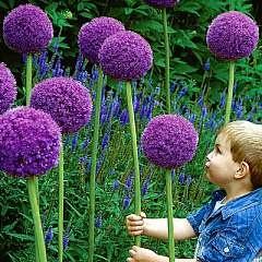 Portland_Childrens_Gardens_Dr_Seuss_Flowers