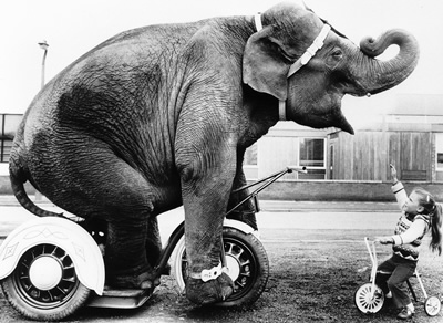 elephant_on_tricycle