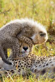 leopard mom and baby