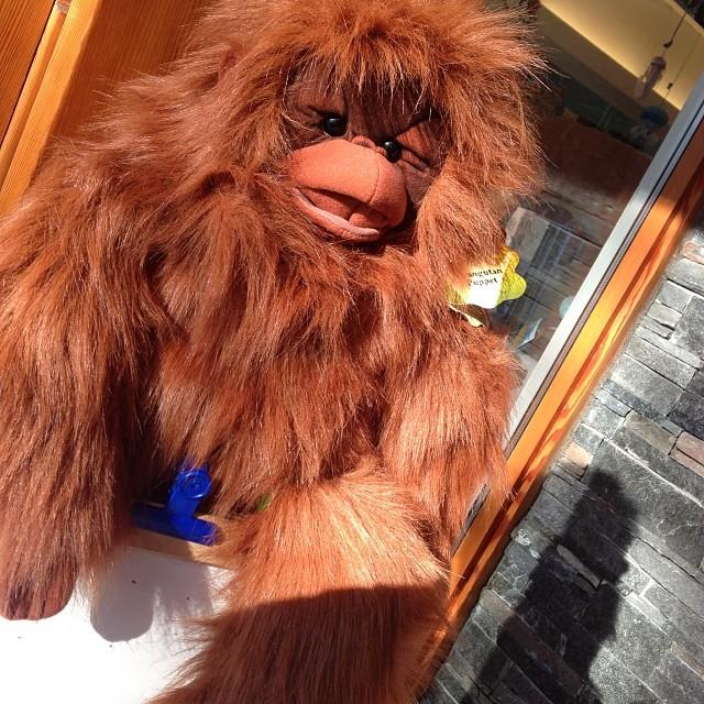 Portland_toys_orangutan_puppet_folkmanis
