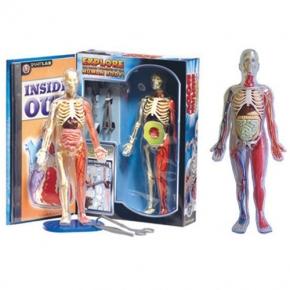 Portland_toys_squishy_human_body_lab
