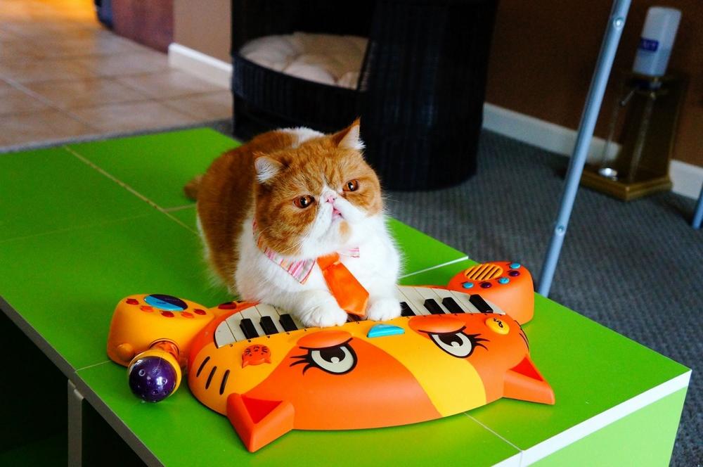 portland toys cat piano