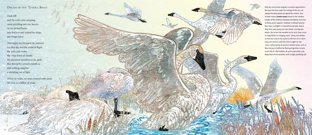 Dream of the Tundra Swan by Joyce Sidman & Rick Allen