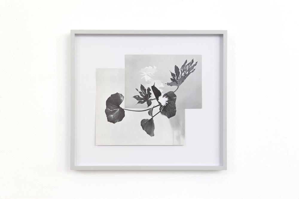 shape/ nashi, 2014  , paper, glue , 27,5 x 30,6cm