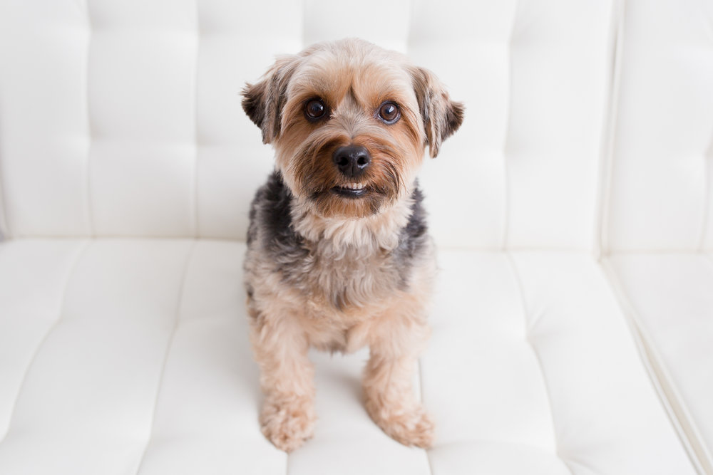 YAY dog moms website-321.jpg