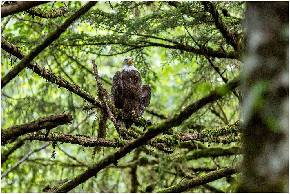 ALASKA travel photography_0134.jpg