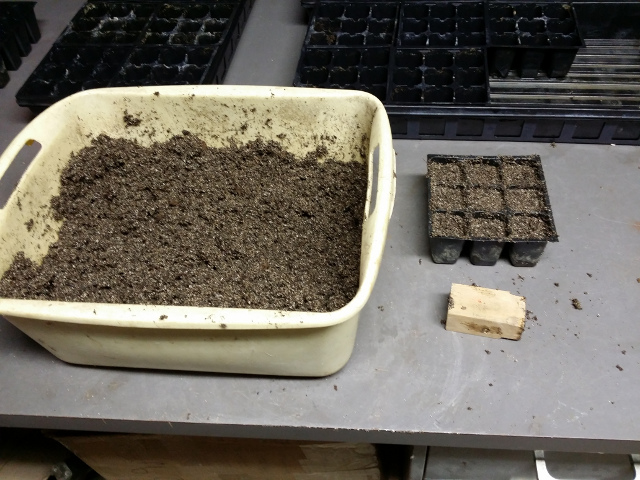 Bin of mixed and wetted seed starting soil with packing wood block and filled cells.