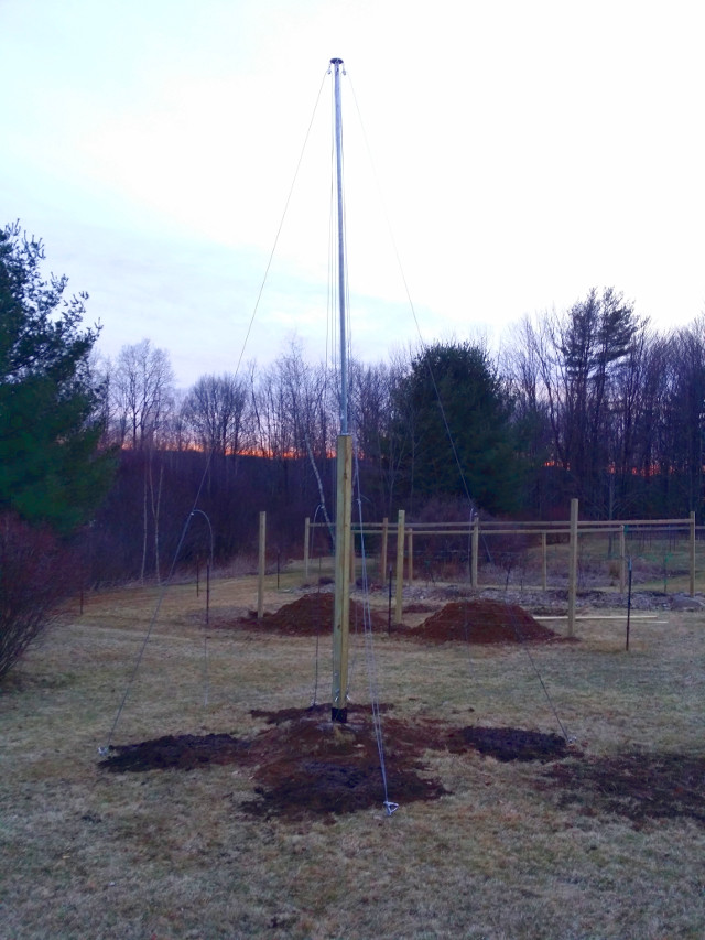 Here is my new hop pole I made. There are four hop plants planted at each cable. The two mini-hugelkultur gardens are in the background. The large grape hugelkultur garden I made last year is behind them. Grape vines grow 3 time faster in these gardens.