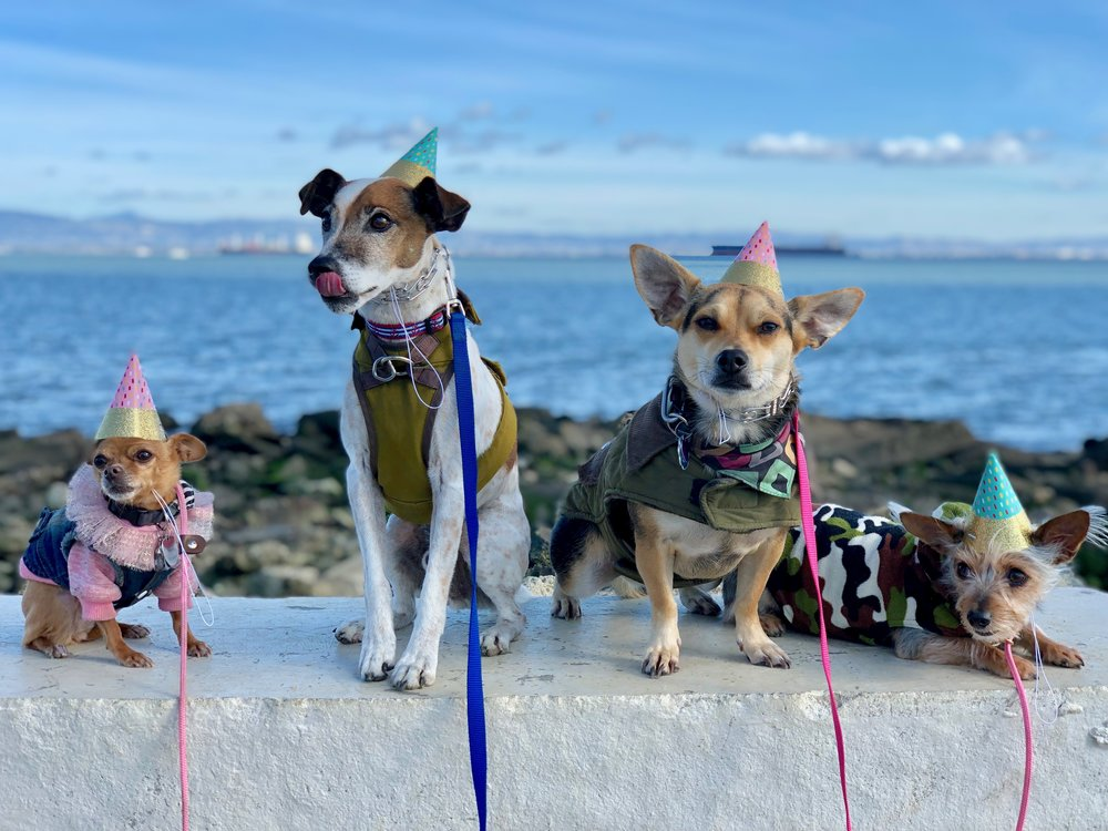 TINY + ED + MUFFIN + HENDERSON   (Heron's Head Park, SF, CA | 2018)