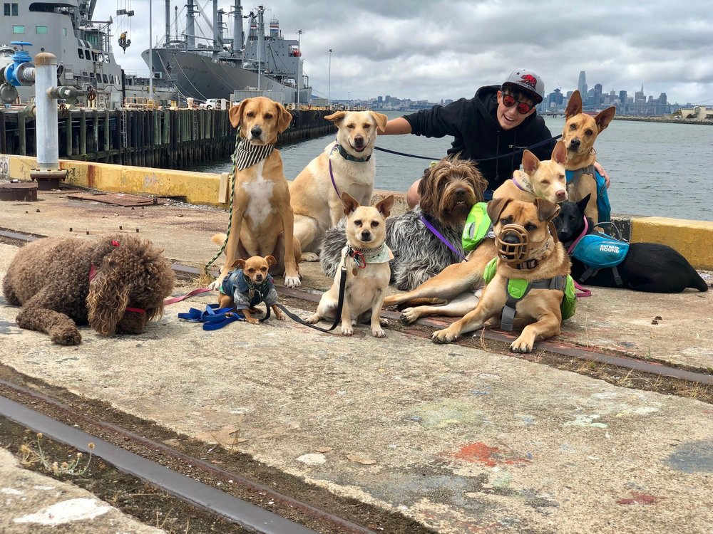 Hadley with (L to R): Gracie (R.I.P.) + Tiny + Arrow + Riley + Wrigley + Archie + Fredo + Luna + George + Indi  [  Alameda Navy Yard  |  Photo by Danielle Jackson  |  May 2018  ]