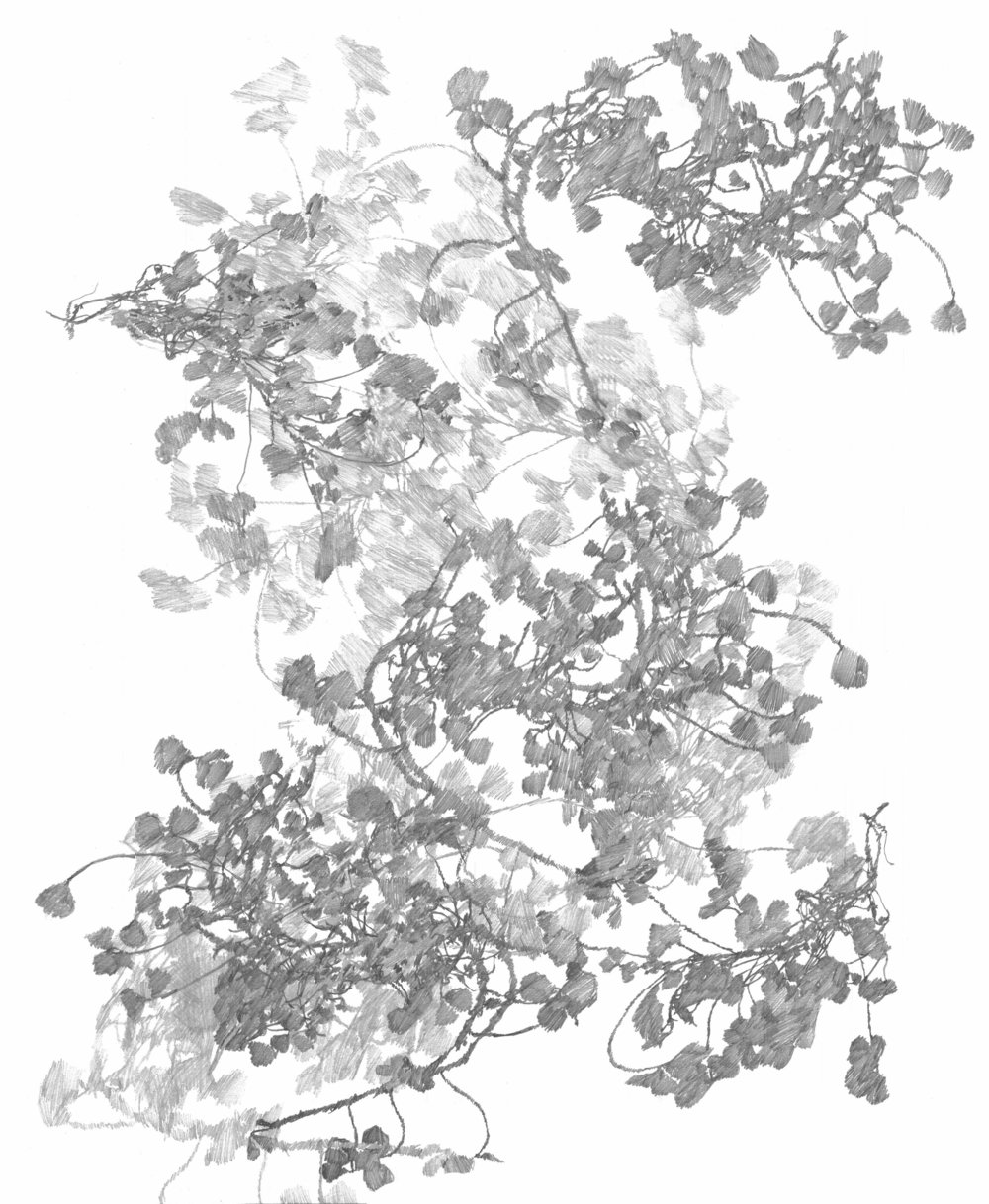 Plant Study 02