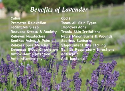 LavenderPostcardnew.jpg