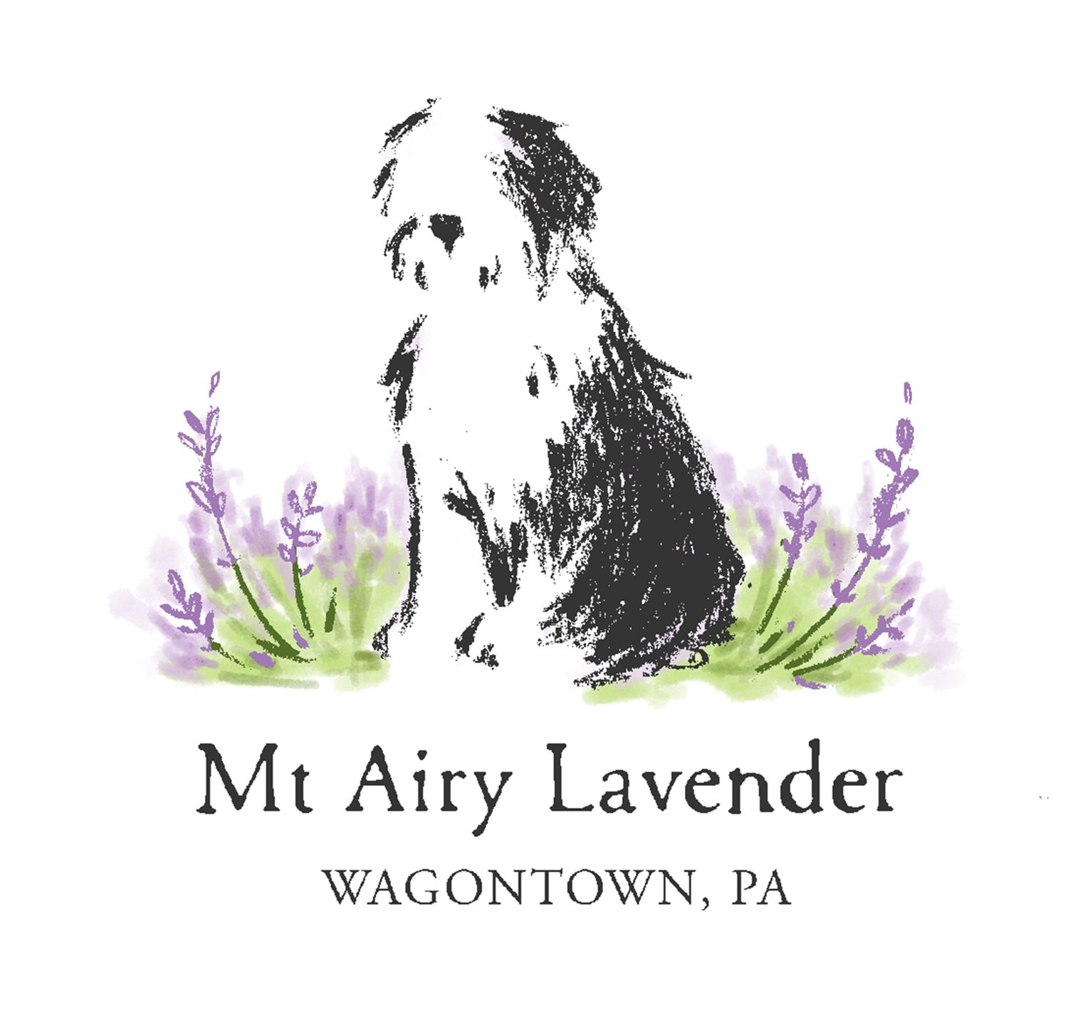 Mt Airy Lavender