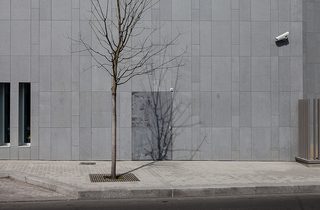 Tree shadow on a grey wall  on Flickr.