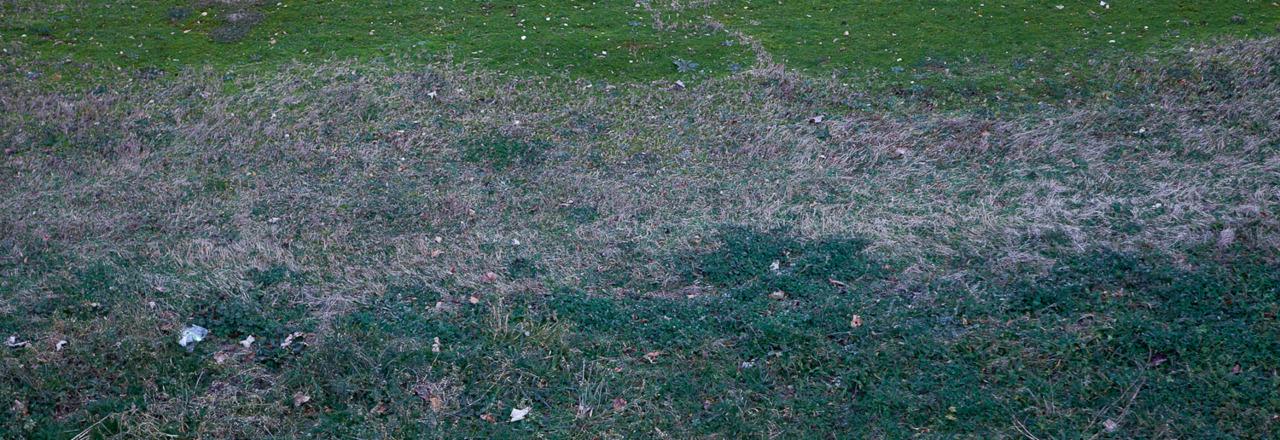 """""""Thinking Mark Rothko"""" (janvier 2012)"""