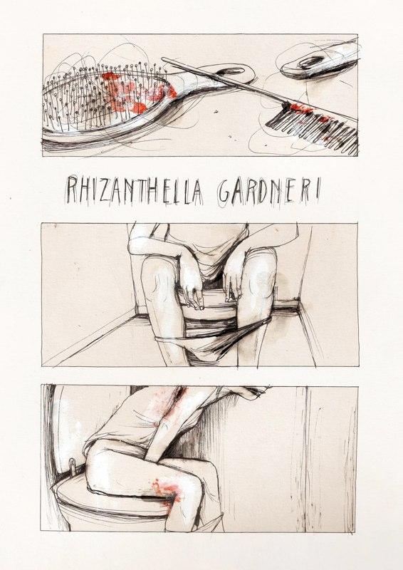 rhizanthella Gardneri 1.jpg