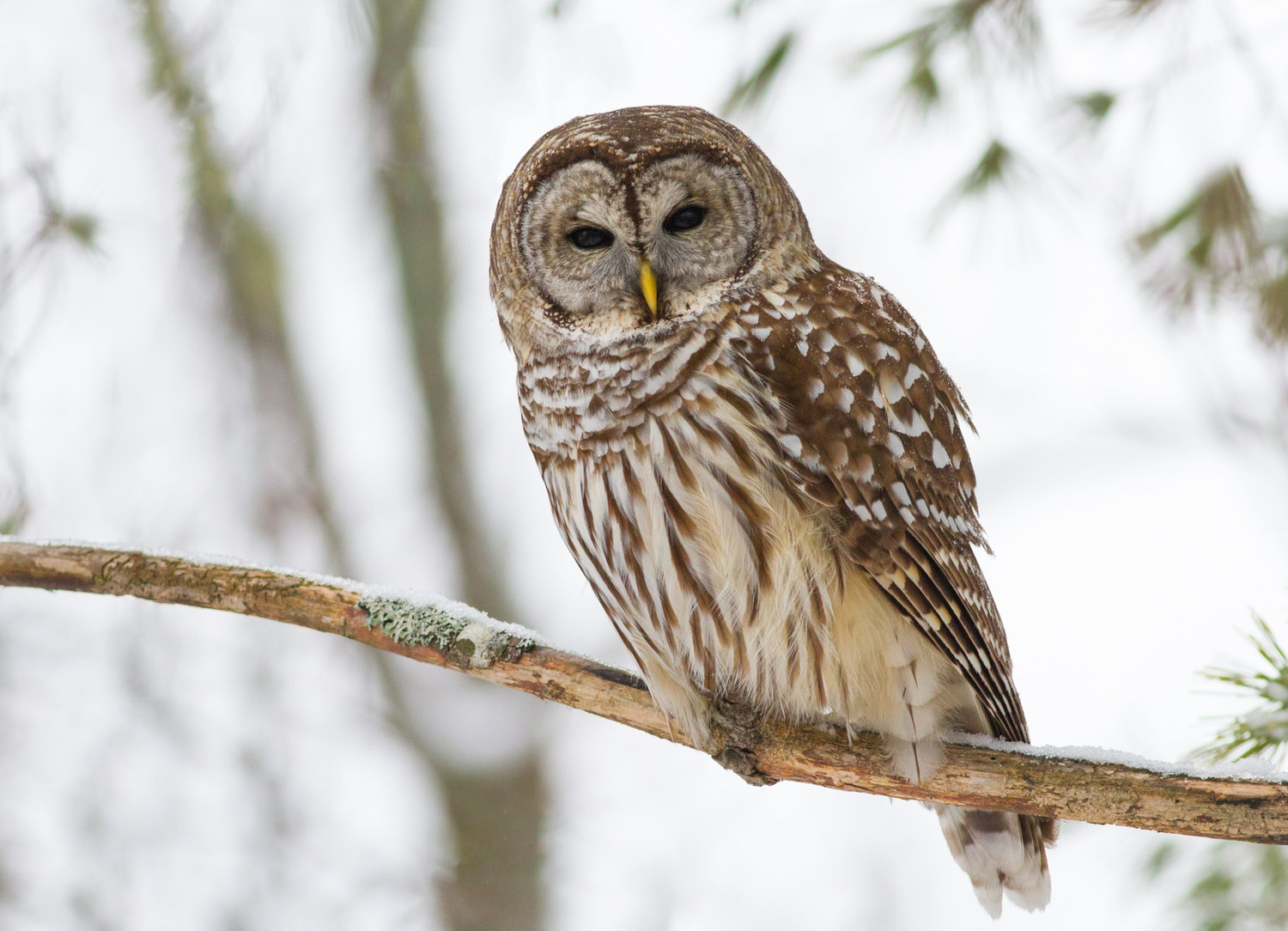Sounds in the night — Lehigh Valley Audubon Society