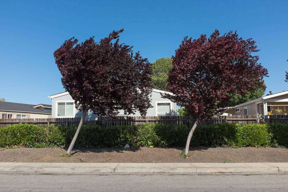 Vienna Drive, Sunnyvale