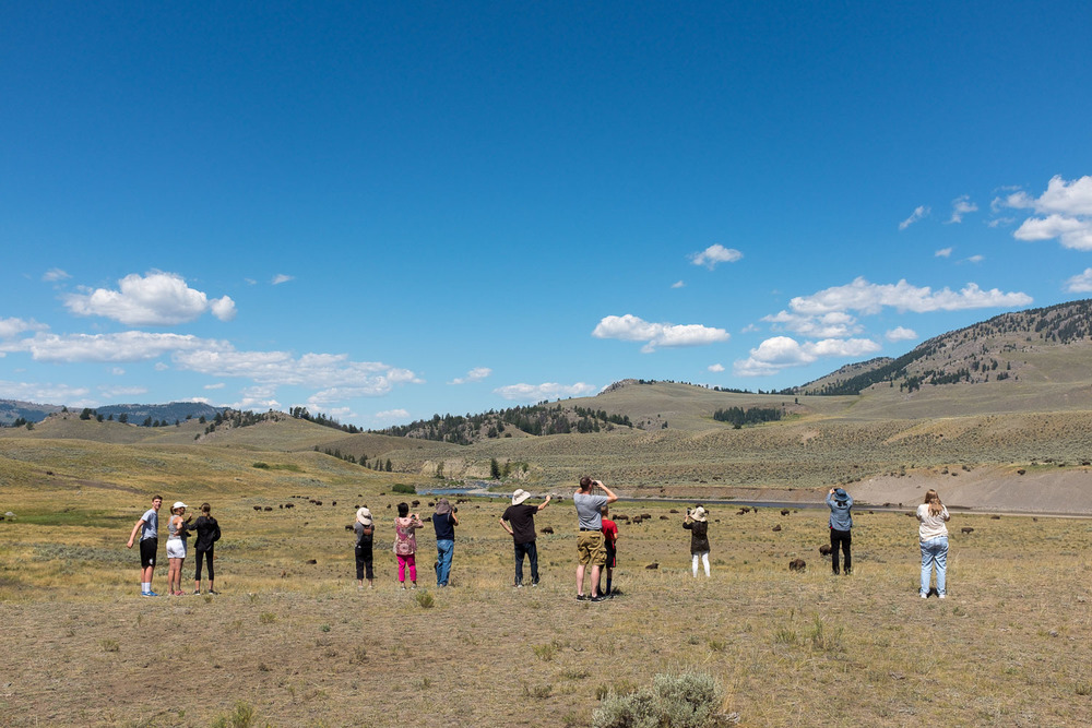 Bison Watchers, Lamar Valley