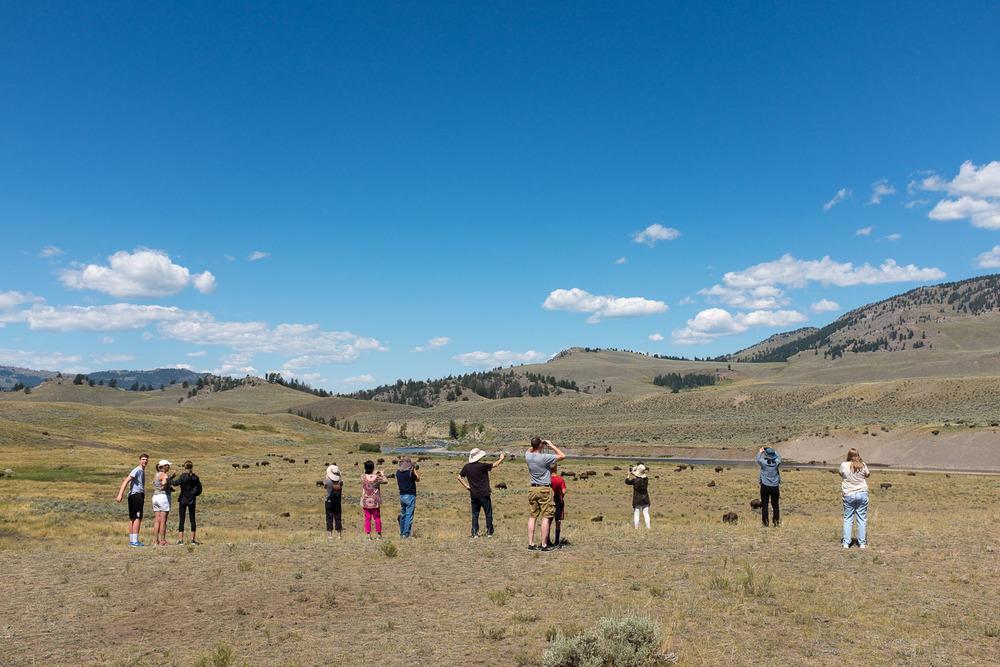 Bison Watchers, Lamar Valley