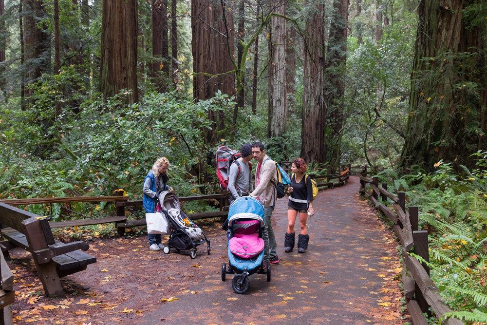 Strollers, Muir Woods