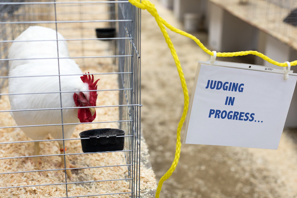 Pacific Poultry Breeders Show, Modesto