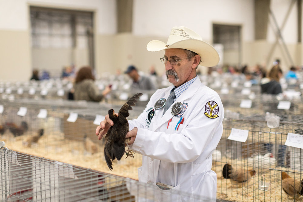 Pacific Poultry Breeders Judging, Modesto.