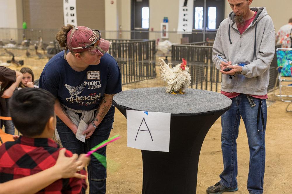 Serama, Pacific Poultry Breeders Show, Modesto.