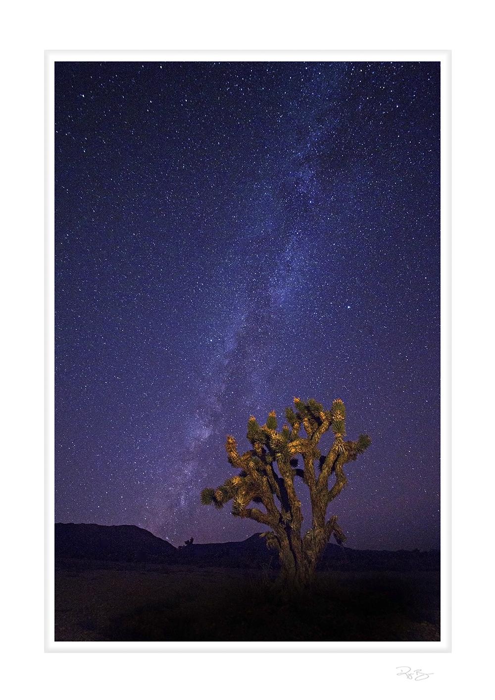 Joshua Tree and the Milky Way ©Ryan Brown 2014