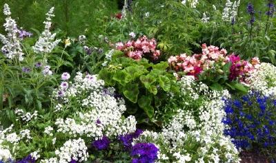 Blütenpracht - dem einen lieb und teuer, dem anderen völlig egal...