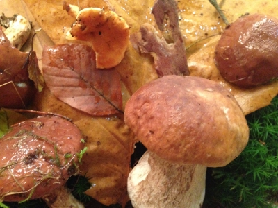 Herbstcollage: Ergebnis eines Antistress-Nachmittags im Wald