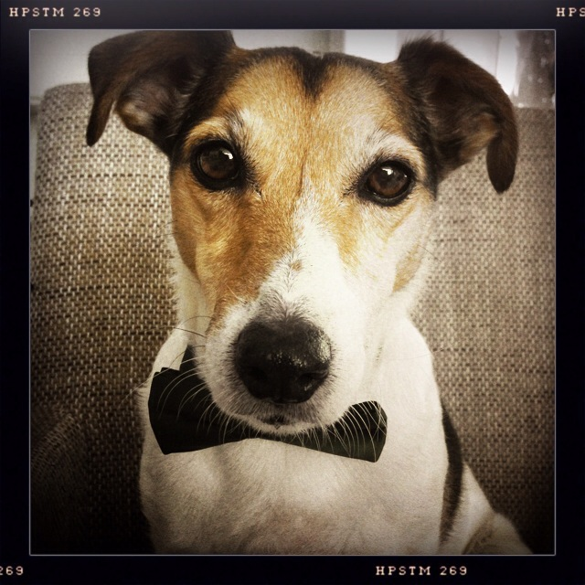 Floris wearing a bow tie and looking as handsome as ever.