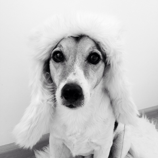 My dog wears it better than me. Floris wears a faux fur hat this time. And it just looks like he has a mullet.