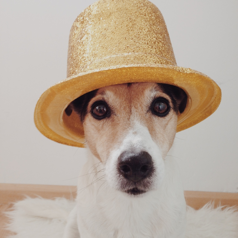 My dog wears it better than me #16. Floris is wearing a magicians hat this week.