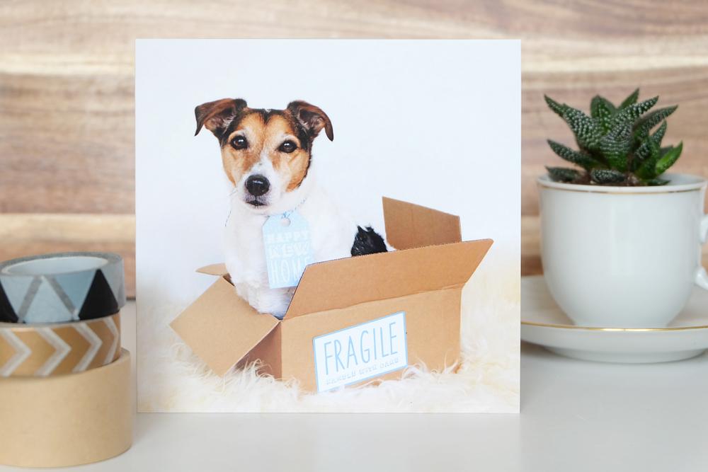 verhuiskaart-met-hond.jpg