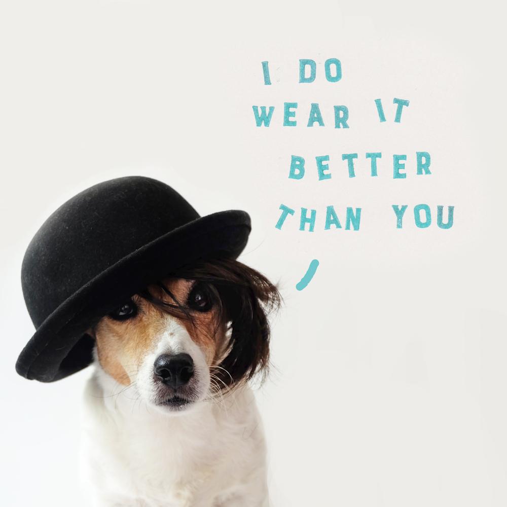 quote-dog.jpg