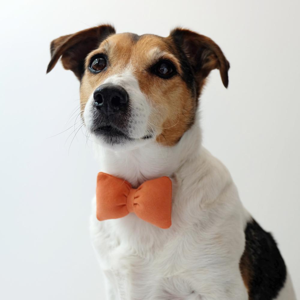 hond-met-strik.jpg