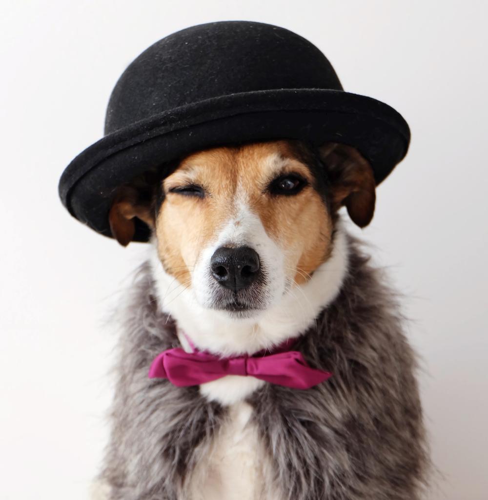 hond-knipoog.jpg