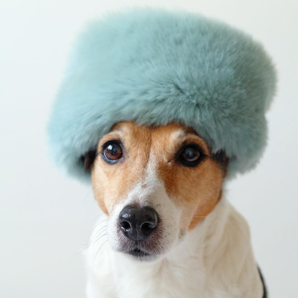 my-dog-wears-it-better-than-me.jpg