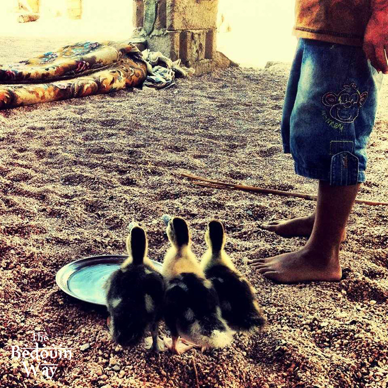 bedouin-boy-with-three-ducks